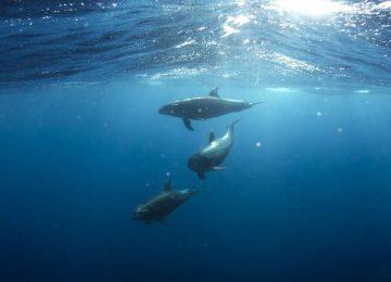 Παγκόσμια Ημέρα Ωκεανών: Οι ωκεανοί, πνεύμονες του πλανήτη!