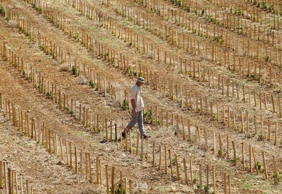 Ποιες περιοχές της Ελλάδας κινδυνεύουν με ερημοποίηση