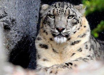 Νότια Αφρική: Λεοπάρδαλη σκότωσε ένα 2χρονο αγοράκι