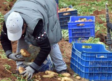 Αγροτικό Δελτίο ειδήσεων (9/11/2020): ΟΠΕΚΕΠΕ πληρωμές – Αποζημιώσεις σε πληγέντες