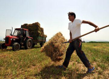 Αγροτικό δελτίο 2/12/2020: Επιπλέον δικαιώματα για βασική ενίσχυση – ΟΠΕΚΕΠΕ πληρωμές