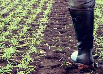 Δελτίο ειδήσεων αγροτών 1/2/2021: ΟΠΕΚΕΠΕ πληρωμές – Τελευταία νέα